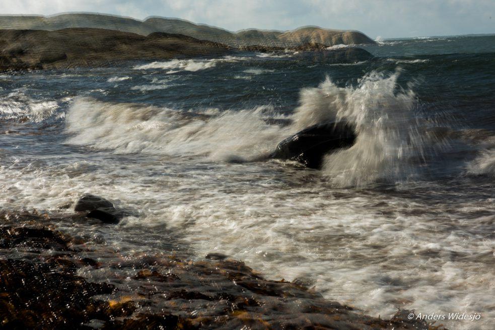Havet vid Åsa