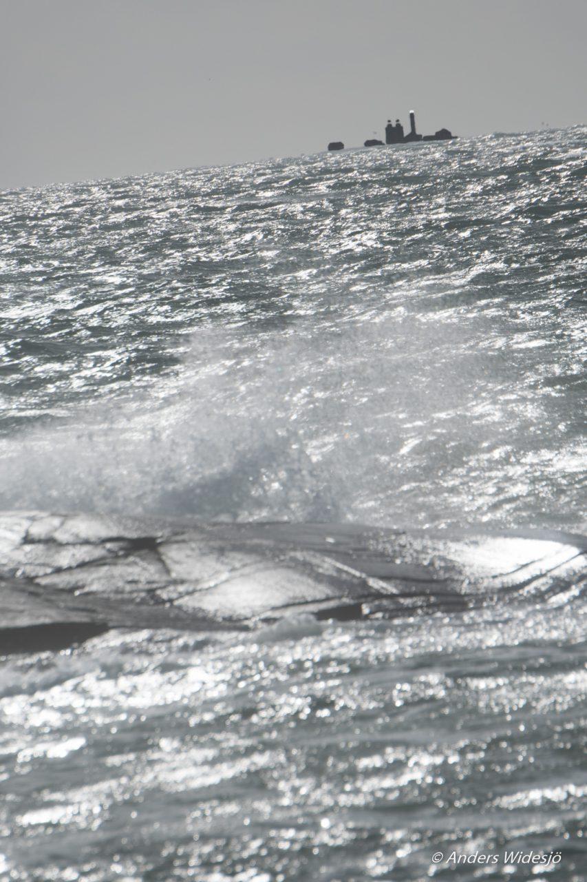 havet-vid-asa-8
