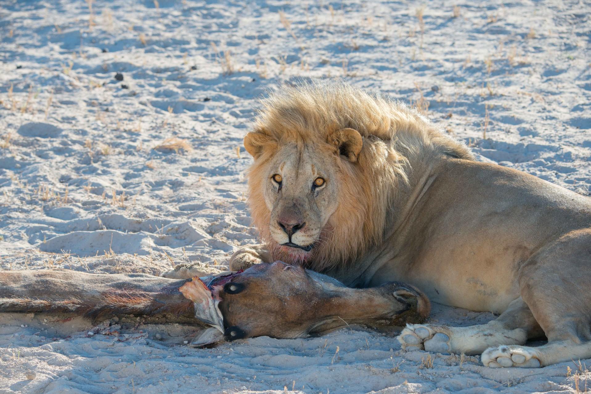 Namibia 15-15