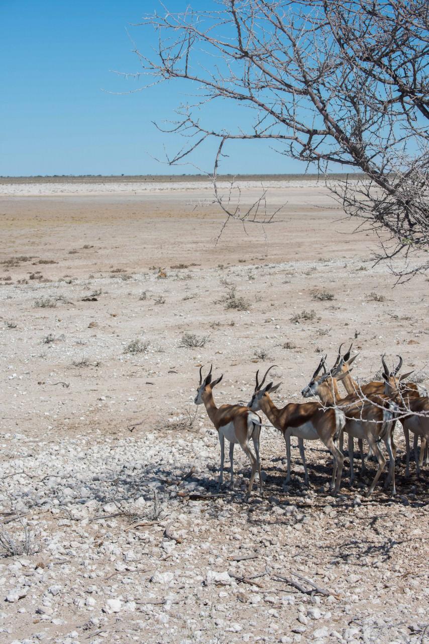 Namibia 15-4