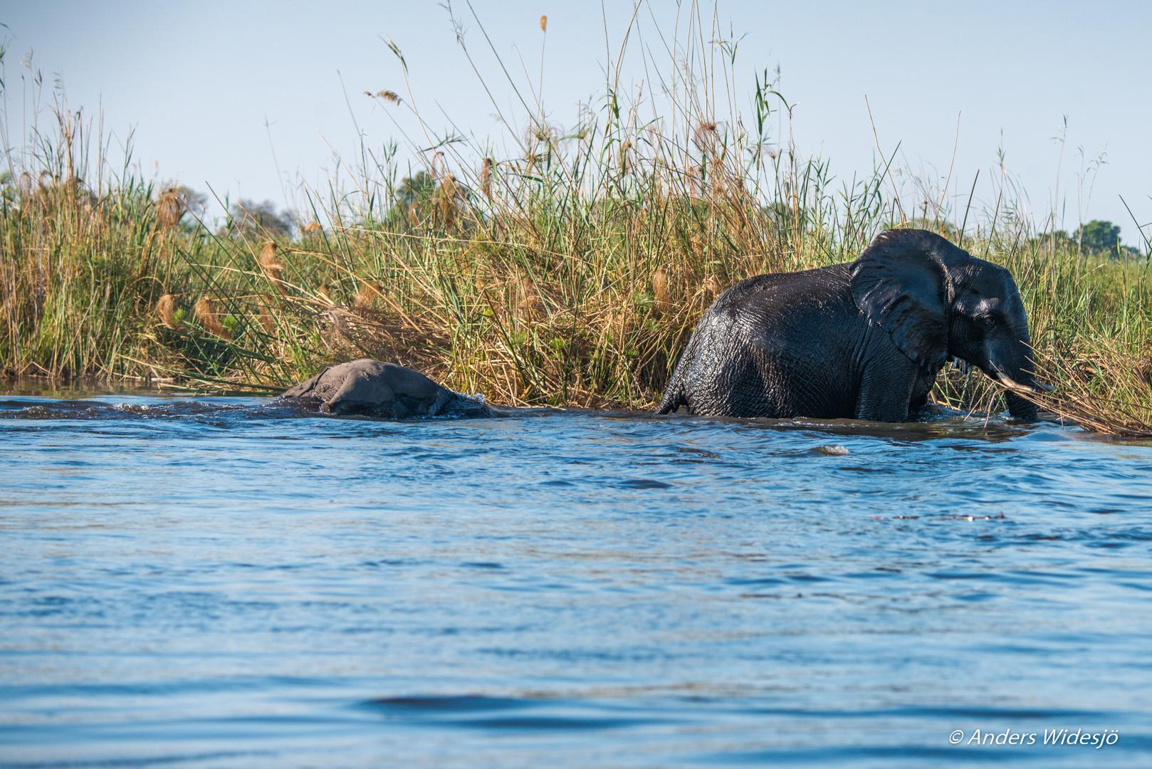 okanwango-floden-9