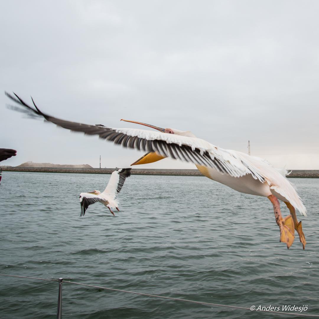walvis-bay-1